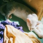 🐈Why is My Cat Suddenly Peeing on My Clothes?
