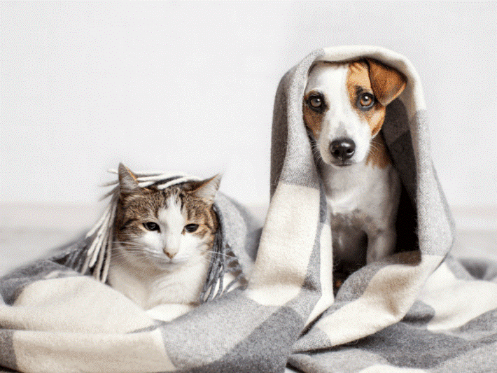 How to Use CBD Oil for Dogs and Cats